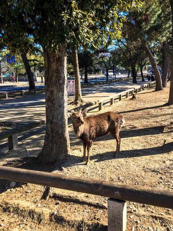nara: NARA Deer Park Stock Photo