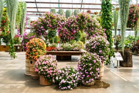 plante design: conception de l'usine de fleur pour amant.