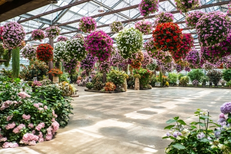 indoor flower park Stock Photo - 23934774