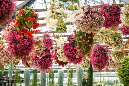 indoor flower park Stock Photo - 23934826