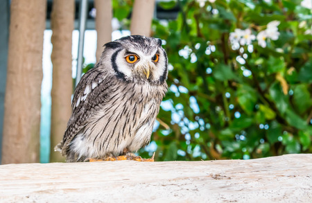 progesterone: owl bird