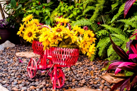 disign: Flower on bicycle for garden disign. Stock Photo
