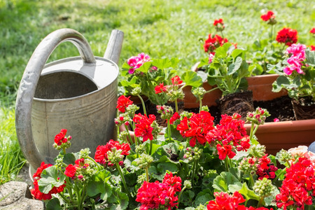 replant: Old watering can standing next to window box with geraniums Stock Photo