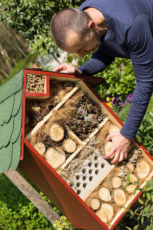 wintering: Man fills an insect house with wood pieces in his garden Stock Photo