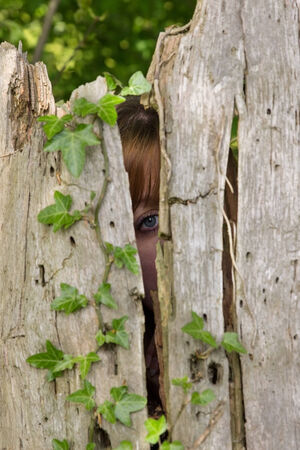 observers: One eye looking through a hollowed-out tree trunk Stock Photo