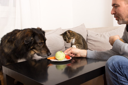 curiously: A dog and a cat sniffing curiously at plate with vegetables