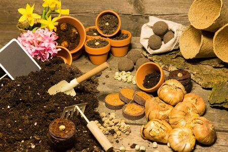 siembra: Several seeds and flower bulbs ready to be potted