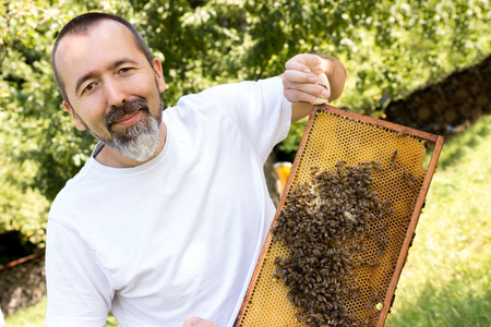 soldiers: A beekeeper holds a honeycomb full of bees in his hand