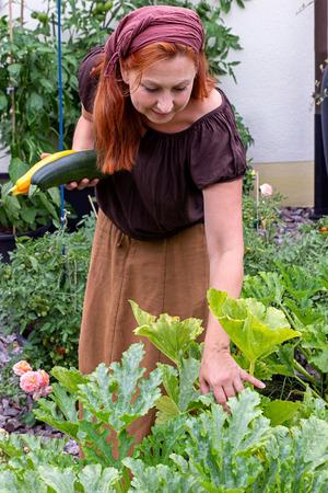 Woman is harvesting zucchini in her garden Imagens