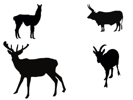cervidae: Vector illustration:herbivores silhouettes on white background.