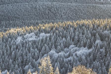 Winter scenery in Tihuta Pass