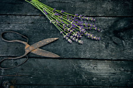 Lavender flowers, rosemary, mint, thyme, melissa with old scissors on a black wooden table. Burnt wood. Spa and cosmetic or cooking background. Фото со стока