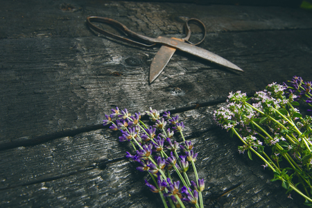 Lavender flowers, rosemary, mint, thyme, melissa with old scissors on a black wooden table. Burnt wood. Spa and cosmetic or cooking background. 스톡 콘텐츠