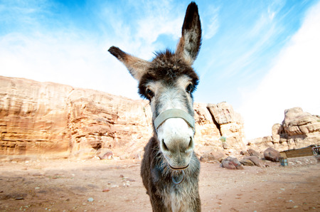 Donkey on a desert in Jordan national park - Wadi Rum desert. Travel photoshoot. Natural background