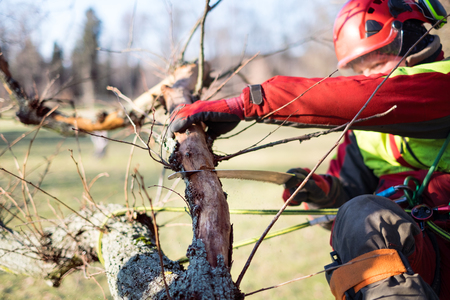 Arborist man cutting a branches with chainsaw and throw on a ground. The worker with helmet working at height on the trees. Lumberjack working with chainsaw during a nice sunny day. Tree and nature Stok Fotoğraf