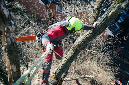 Baumpfleger Mann, der einen Zweig mit Kettensäge schneidet und auf einen Boden wirft. Der Arbeiter mit Helm arbeitet in der Höhe an den Bäumen. Holzfäller arbeitet mit Kettensäge an einem schönen sonnigen Tag. Baum und Natur
