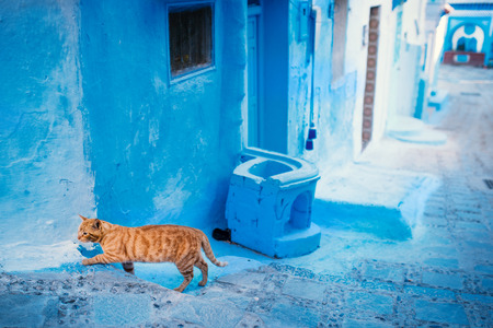 Chefchaouen - blue city of Morocco. Orange cat in the blue city. Detail on a blue doors and walls. Blue town street