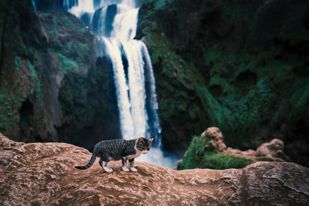 Beautiful waterfalls called - Ouzoud in Morocco. Ouzoud Falls in Africa. Landscape photo with small cat.
