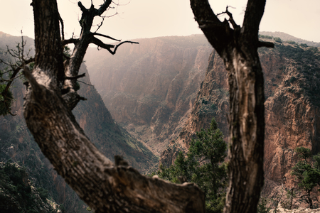 On the top of mountains is coniferous trees against a canyon. Sunset view. Nature. Morocco nature.