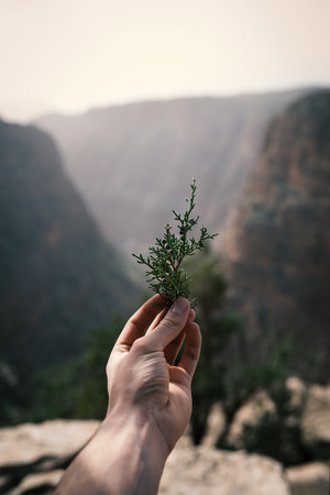 Man has coniferous branches in hand against canyon. Sunset view. Nature. Morocco nature. Reklamní fotografie