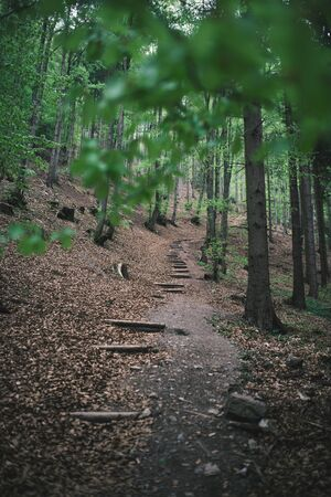 Path in the forest with no people. Beautiful spring season in the forest. Фото со стока