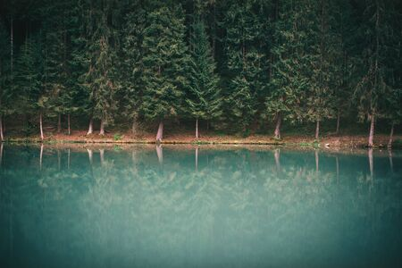 Lake in the forest with beautiful reflection. Moody tones of forest.