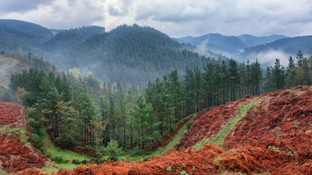 Basque Country Forrest