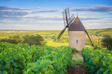 Burgundy Vineyard and Windmill near Santenay - France