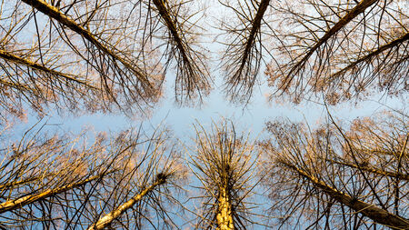 meta: Meta sequoia lane top view in front of blue sky