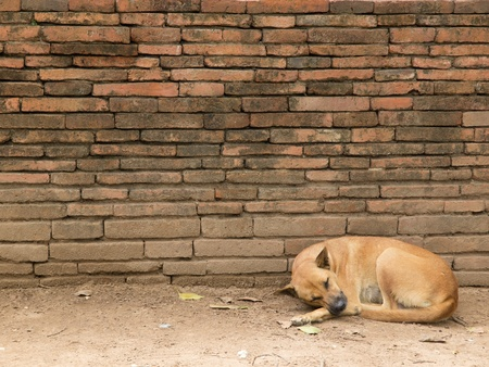 Dog in Thai temple photo