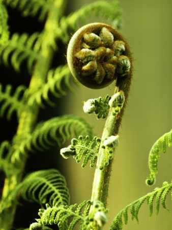 new beginning: New Zealand fern