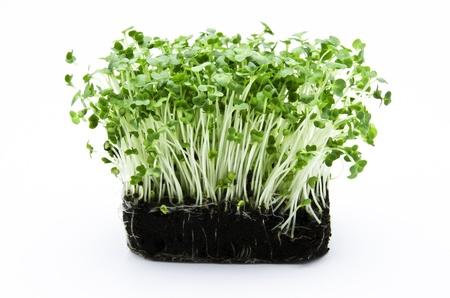 cress: cress salad