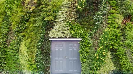 Door on big green ivy background. photo