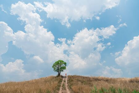 lonley: Man and lonley tree on the hill against with clear bule sky background.