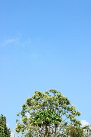lightsome: Tree