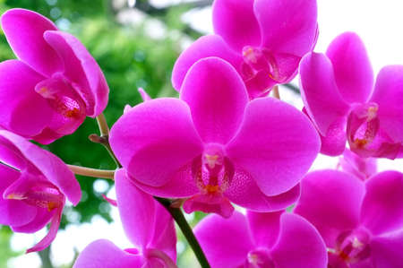 goodly: Pink Orchid