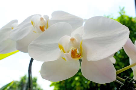 White Orchid Stock Photo - 13105027