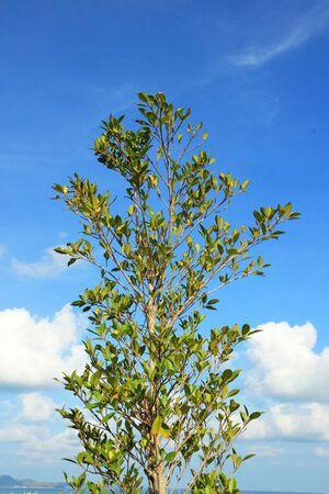 Tree Stock Photo - 13316921