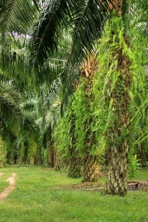Palm tree Stock Photo - 13638134