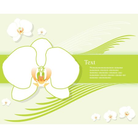 goodly: Background orchid Illustration