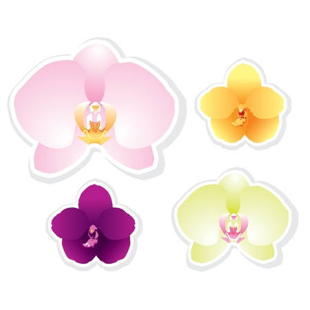 Orchid vector isolated on white Vector