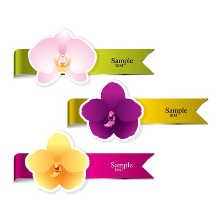 pink orchid: Background Orchid vector
