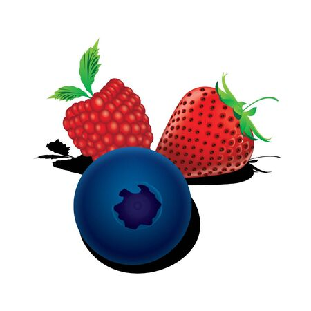 Mixed berries Raspberry, blueberry, strawberry vector Stock Vector - 15558094