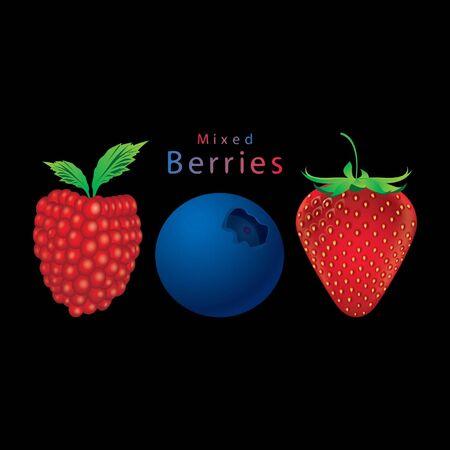 Mixed berries Raspberry, blueberry, strawberry vector  Stock Vector - 15558126