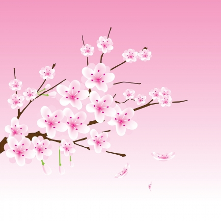 chinese new year illustration: vector cherry blossom branch