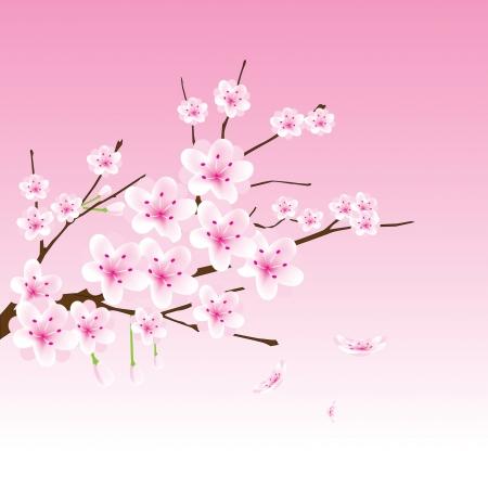 flores chinas: vector flor de cerezo rama