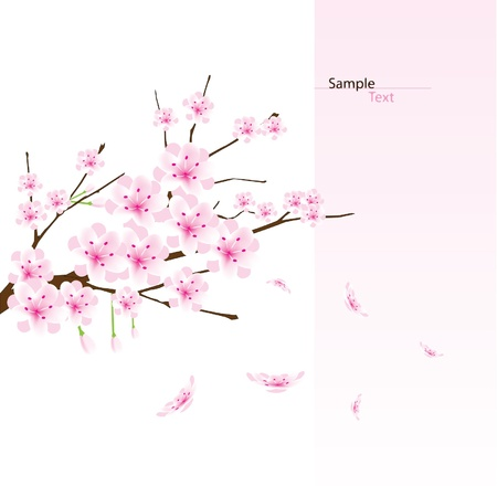 vector cherry blossom branch Vector