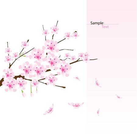 vector cherry blossom branch 免版税图像 - 16644251