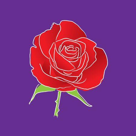rose vector. Stock Vector - 17522082