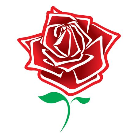 rose vector. Illustration